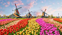 Find cheap flights from Tel Aviv to North Holland
